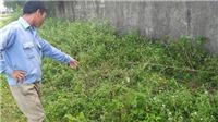 Điều tra việc học sinh lớp 2 ở Nghệ An nghi bị xâm hại