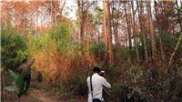 Hàng ngàn cây thông rừng bị hạ độc ở Lâm Đồng