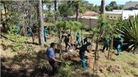 Trồng thêm 6.000 cây thông và mai anh đào tại Đà Lạt