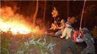 Nỗi đau cháy rừng