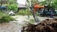 Bão số 3 gây mưa ngập, đổ cây tại Hải Phòng
