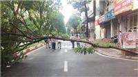 Để tai nạn do cây đổ không còn là mối họa rình rập trên đường phố Hà Nội