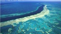 Thêm 'tiếng kêu cứu' từ rạn san hô lớn nhất thế giới