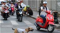 Tông vào chó chạy qua đường, hai người thương vong