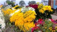 Làng hoa Tây Tựu, Hà Nội chuẩn bị mùa hoa Tết Canh Tý