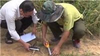 Bác bỏ tin hổ xuất hiện gần hang động núi lửa Krông Nô