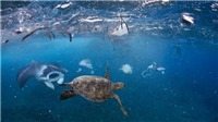 Bảo vệ môi trường: 'Lưới ma' ám ảnh Đại Tây Dương