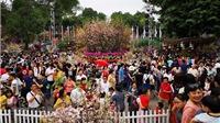 Lễ hội Kanagawa Nhật Bản tại Phố đi bộ Hồ Gươm