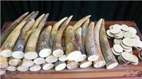VKSND Hà Nội kháng nghị việc áp dụng án treo trong vụ án mua bán 17 kg ngà voi