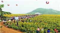 Nghệ An tổ chức Lễ hội hoa hướng dương năm 2019