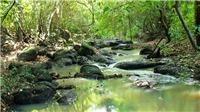 Phù phép đất rừng Vườn quốc gia Phú Quốc thành lập dự án: Nghi vấn lập khống nguồn gốc đất
