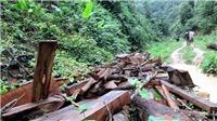 Đắk Lắk: Bắt giữ 5 đối tượng vây chém cán bộ kiểm lâm