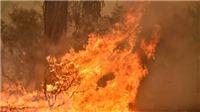 Cháy rừng phá hủy giá trị cuộc sống của người dân Australia như thế nào?