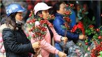 Ngắm chợ hoa xuân rực rỡ giữa phố cổ Hà Nội