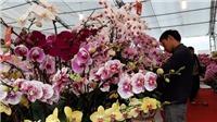 Hoa Tết đa dạng, nhiều giống ngoại với giá cả hợp lý
