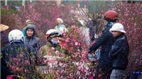 Thời tiết 26 Tết Canh Tý: Không khí lạnh tăng cường, Bắc Bộ rét đậm, rét hại