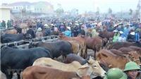 Xem phiên cuối năm của 'chợ trâu bò lớn nhất Đông Nam Á' tại Đô Lương