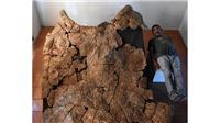 Phát hiện hóa thạch rùa khổng lồ thời tiền sử tại Nam Mỹ