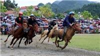 Giải đua ngựa Bắc Hà lễ hội văn hóa đặc sắc vùng Tây Bắc