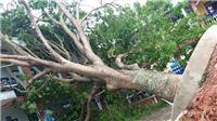 Bắc Giang: Sở GD&ĐT chỉ đạo kiểm tra hệ thống điện và cây xanh trong trường học