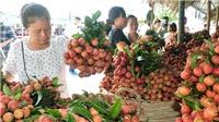 Bắc Giang: Đề xuất Bộ Công Thương đồng chủ trì hội nghị trực tuyến xúc tiến tiêu thụ vải thiều