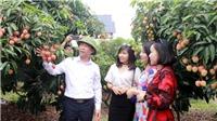 Bắc Giang: Quảng bá trực tuyến nông sản sang thị trường Singapore