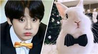 Cười ngất với những 'meme' chế theo 'Thỏ' Jungkook BTS