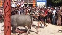 Huế: Trả lại số tiền người dân đã đóng góp cho Lễ hội đâm trâu