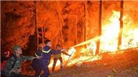 Cháy rừng ở Hà Tĩnh: Đám cháy lại bùng phát tại xã Xuân Hồng