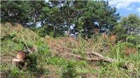 Lâm Đồng: Điều tra vụ người chết trong rừng bị trúng đạn chì