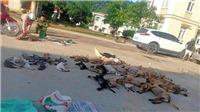 Thanh Hóa: Phát hiện đôi nam nữ trộm hơn 2 tạ chó, mèo trong một đêm