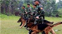 Quảng Trị đề nghị dùng chó nghiệp vụ xua đổi đàn vọoc tấn công người dân
