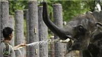 Động vật trong các vườn thú Thái Lan gặp nguy vì Covid-19