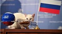 Mèo Achilles, 'nhà tiên tri' ở World Cup 2018