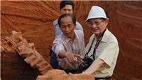 ĐỒ HỌA: Cuộc đời, sự nghiệp GS Phan Huy Lê, cây đại thụ của nền sử học Việt Nam
