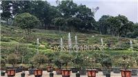 Khám phá vườn hồng lập kỷ lục Guiness lớn nhất Việt Nam
