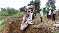 Nhiều địa phương phát hiện thêm ổ dịch tả lợn châu Phi