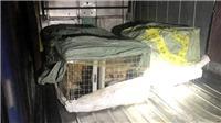 Quảng Ninh: Bắt giữ xe ô tô chở khách vận chuyển 6 con cáo quý hiếm