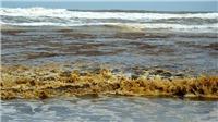 Quảng Ngãi: Nước biển đổi màu chưa rõ nguyên nhân