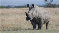 Con tê giác già nhất thế giới qua đời ở Tanzania