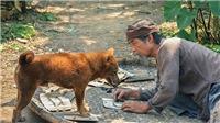 Phim 'Cậu Vàng' tung teaser trailer: Xót xa cảnh Lão Hạc bán chú chó Vàng