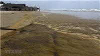 Nước biển đổi màu tại Quảng Ngãi: Xuất hiện hai chất Lignin và Tanin