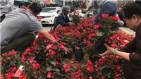 Cảnh 'hôi hoa' làm tắc một góc đường Kim Mã trước ngày Quốc tế Phụ nữ