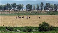 Triều Tiên trải qua đợt nắng nóng kỷ lục