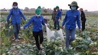 Góc nhìn 365: Điệp khúc 'giải cứu nông sản'