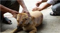 Bé gái 5 tuổi bị chó nhà nuôi cắn đã qua cơn nguy kịch