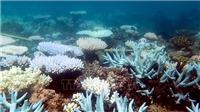 Australia lắp 'mắt thần' bảo vệ rạn san hô lớn nhất thế giới