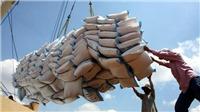 Thủ tướng Chính phủ yêu cầu tạm dừng ký hợp đồng xuất khẩu gạo