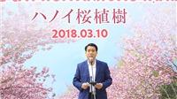 Trồng thêm 500 cây anh đào tại Công viên Hòa Bình, Lễ hội Hoa anh đào Hà Nội diễn ra từ 23-26/3