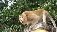 Cấp cứu bé gái 14 tháng tuổi bị khỉ cắn rách đầu, lún sọ